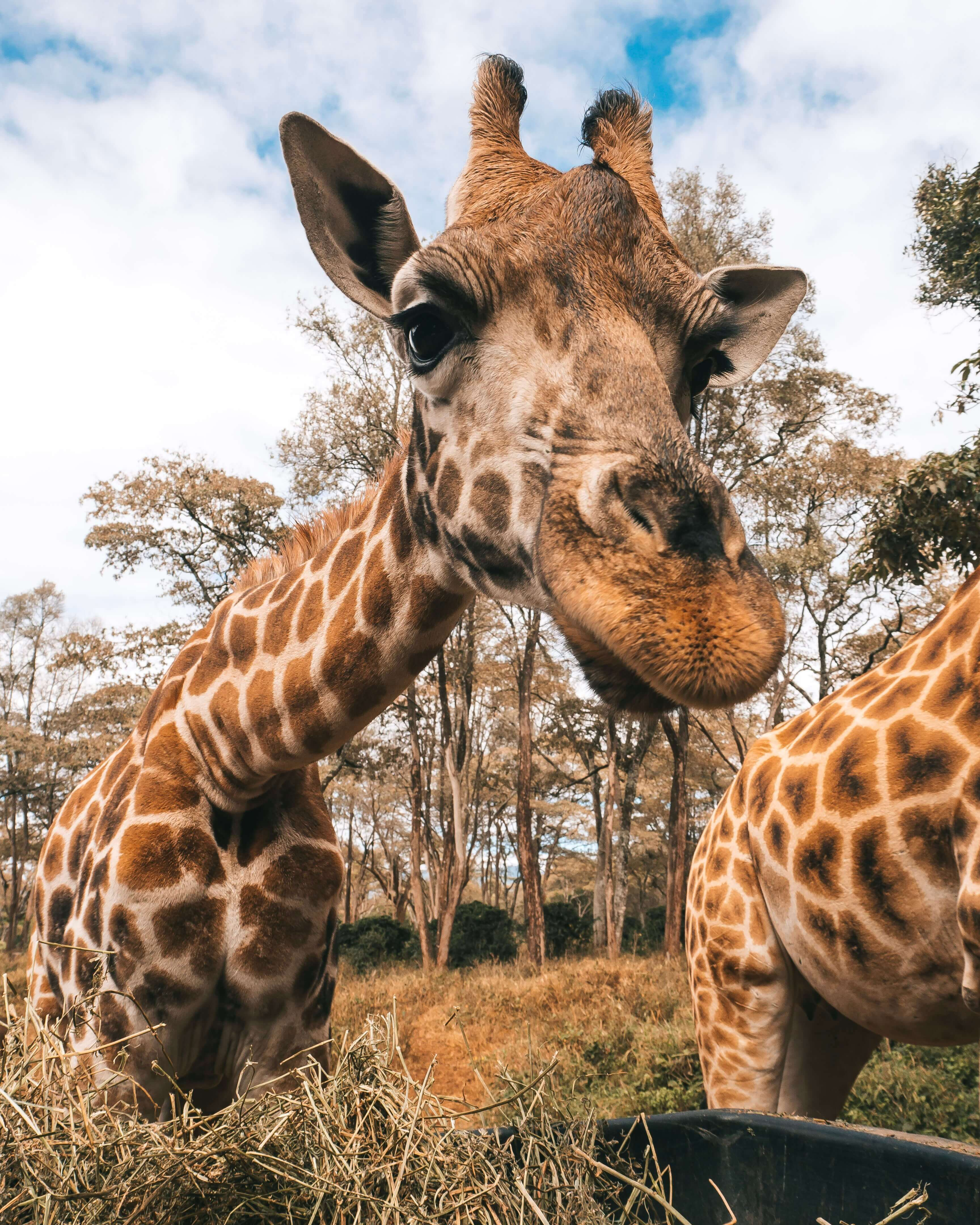 What to do in Nairobi